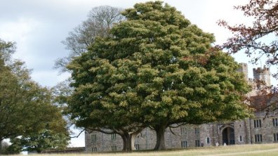 Top Heavy Tree