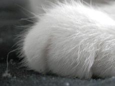 A sweet white paw