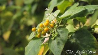 Botanical Gardens - Part 1/3 - Image 5/18