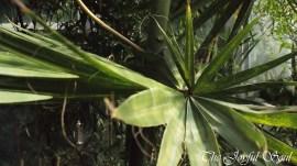 Botanical Gardens - Part 1/3 - Image 8/18