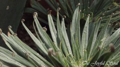 Botanical Gardens - Part 2/3 - Gallery