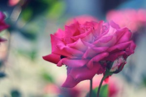 Bleeding Love – A Heart Refined By Fire