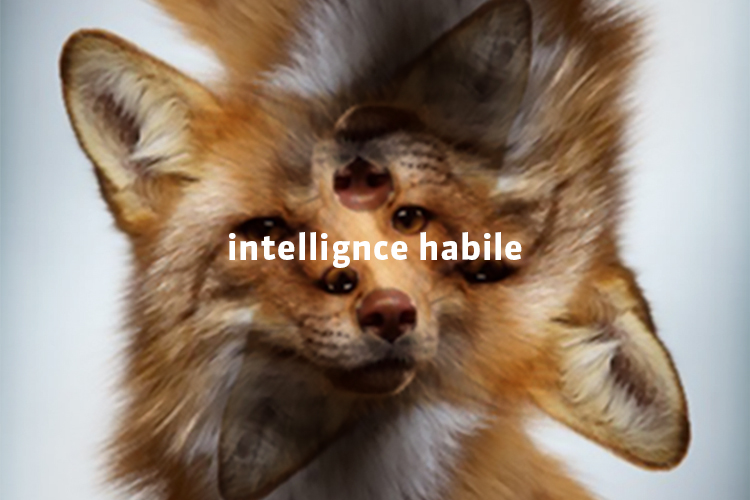 Intelligence habile