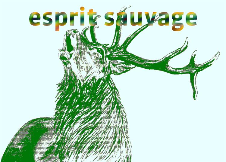 PickUp'Day #9 : Esprit sauvage