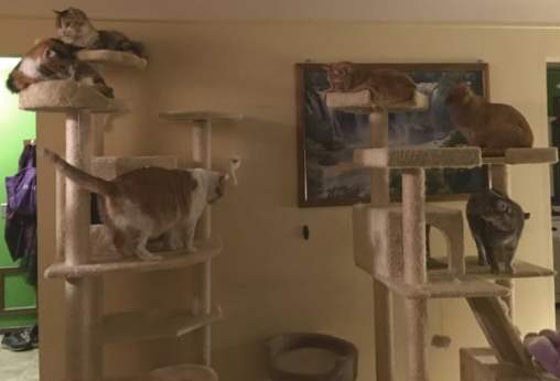 all 6 cats on the cat towers