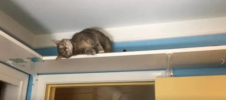 Violet on a cat shelf
