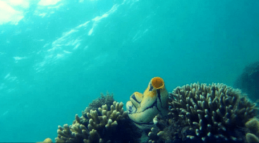 snorkeling-3