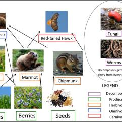 Taiga Food Web Diagram Roller Door Control Wiring Grizzly Bears Of Canada Bear