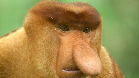 After the platypus in 2012, F1 designers were forced to select a new evolutionary mascot for their nose designs.