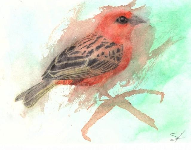 Red Fody (Temper Tantrum)