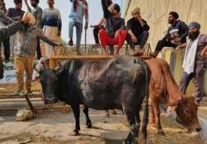 Farmers Protest Animal