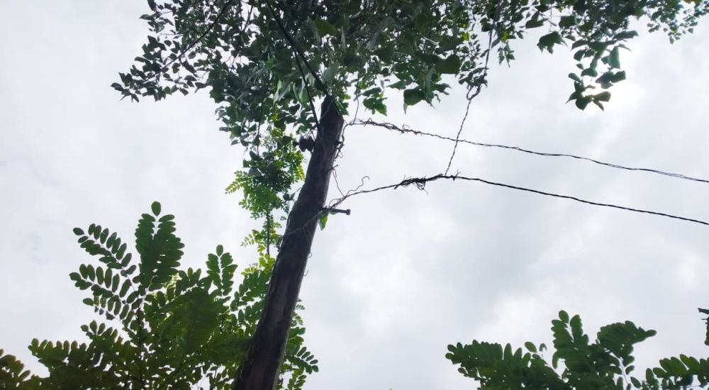 Transmission wires hanging on tree branches pose serious threat to residents
