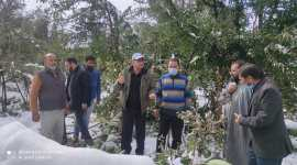 Horticulture team visits snow hit orchards of Kulgam