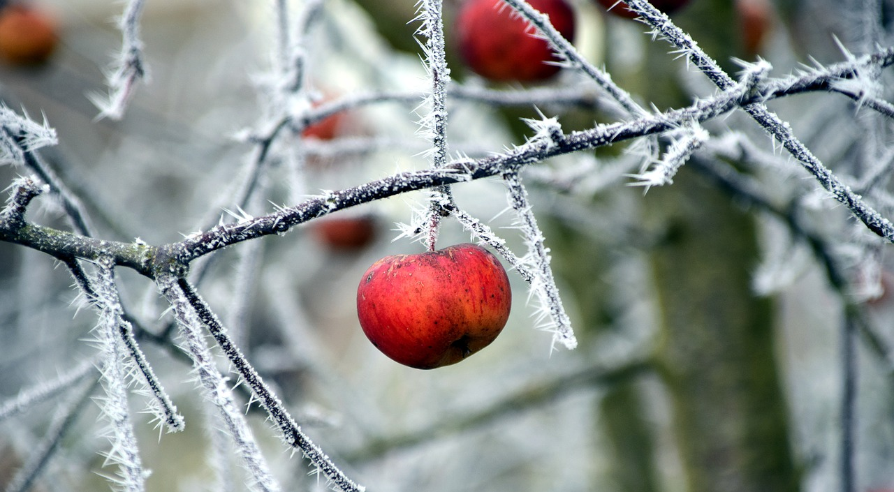 Best Fruit Trees for Cold Winter Climates