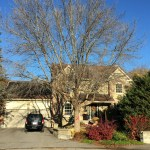 The Story of My Great Big Tree