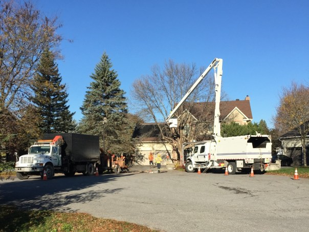 dead tree removal, emerald ash borer, tree removal, dead tree