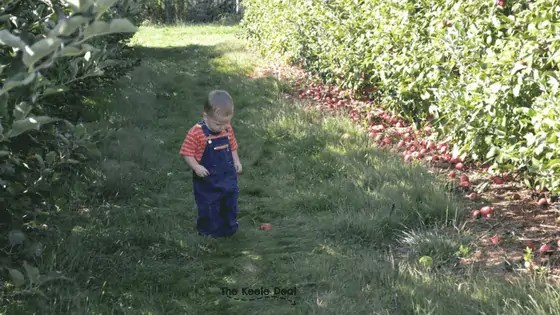 Apple picking at Larriland Farm review and a few tips for taking kids apple picking