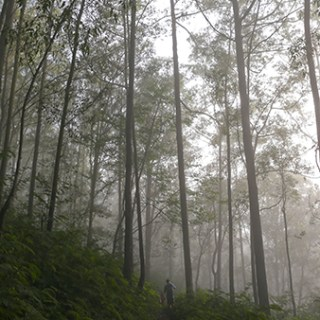 mount-batur-trees-descend