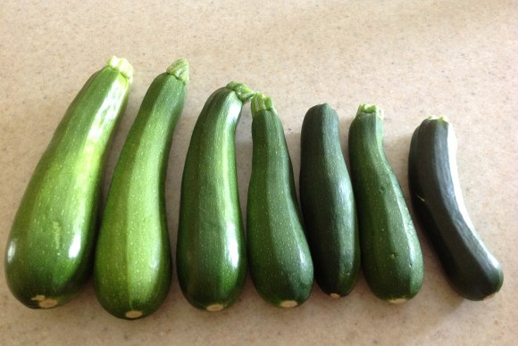 These were our normal zucchinis before our vacation.  Large, but not ridiculously so.  Apparently, my presence stunts their growth.  Perhaps the universe is telling me to stay on vacation?!?