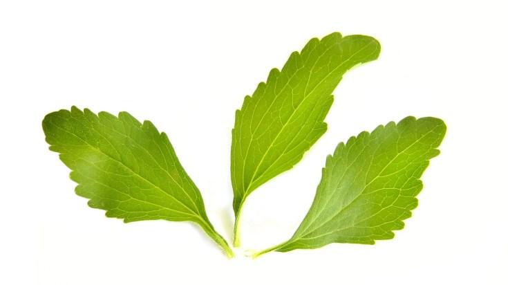 stevia plant leaves