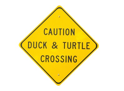 Andy_Spring Hazard_duck-and-turtle
