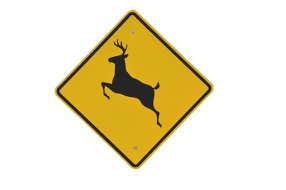 deer-crossing-2079620__340