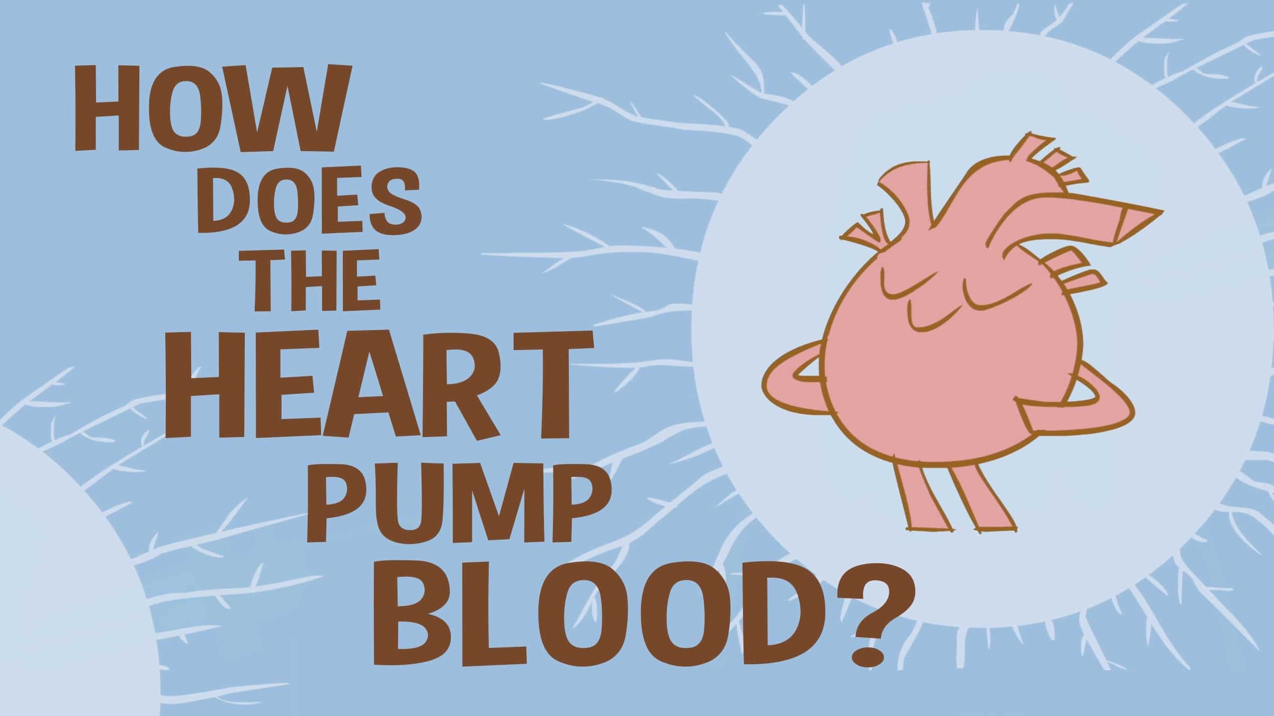 Ted Ed How Does The Heart Pump Blood