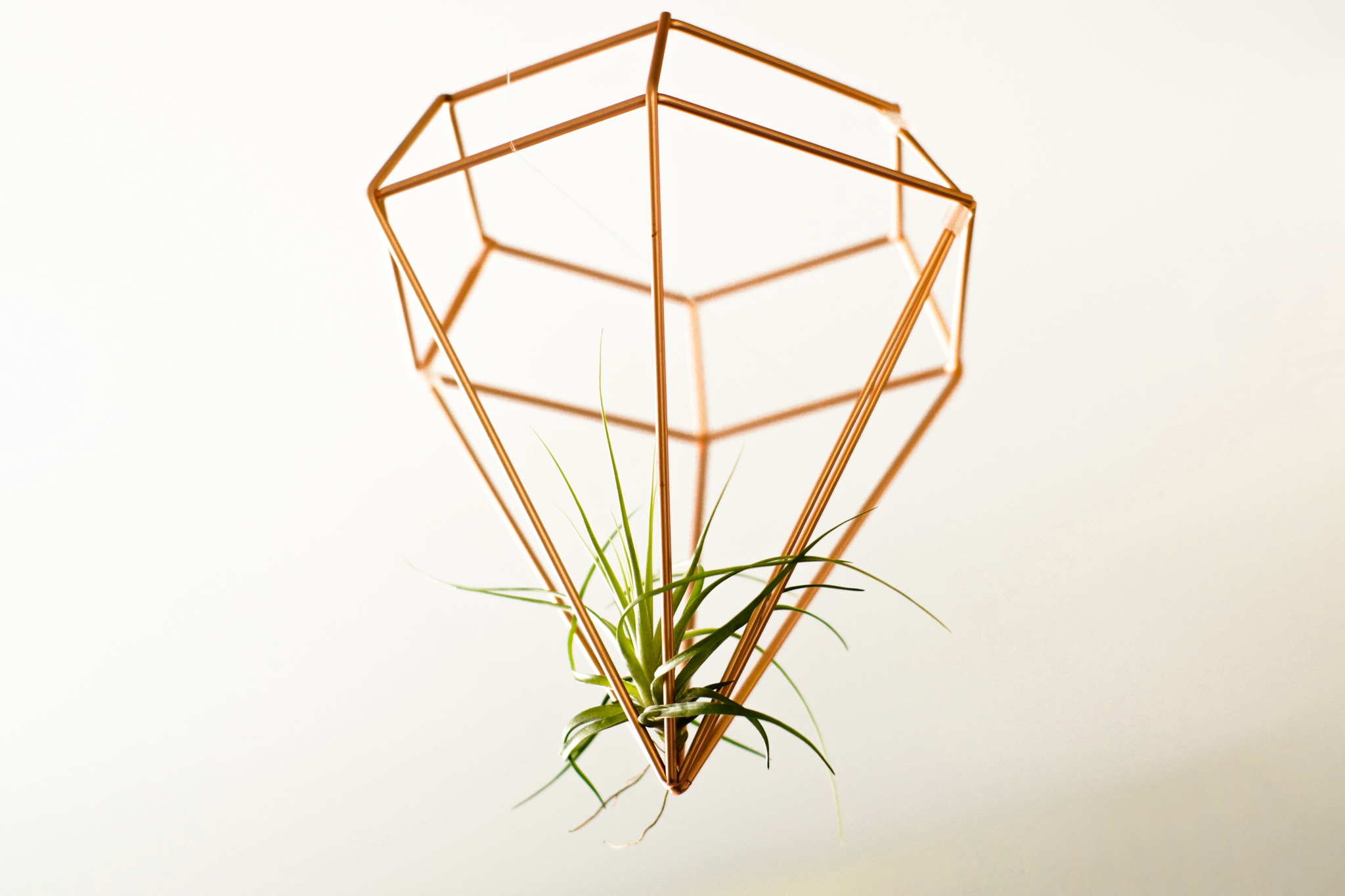air plant watering instructions