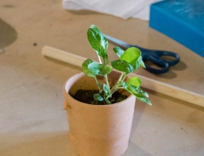 An indigo plant.