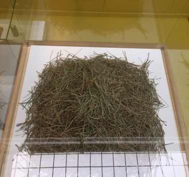"Pine Needles — ""Forest Wool"" — Tamara Orjola — Dutch Design Week 2017"