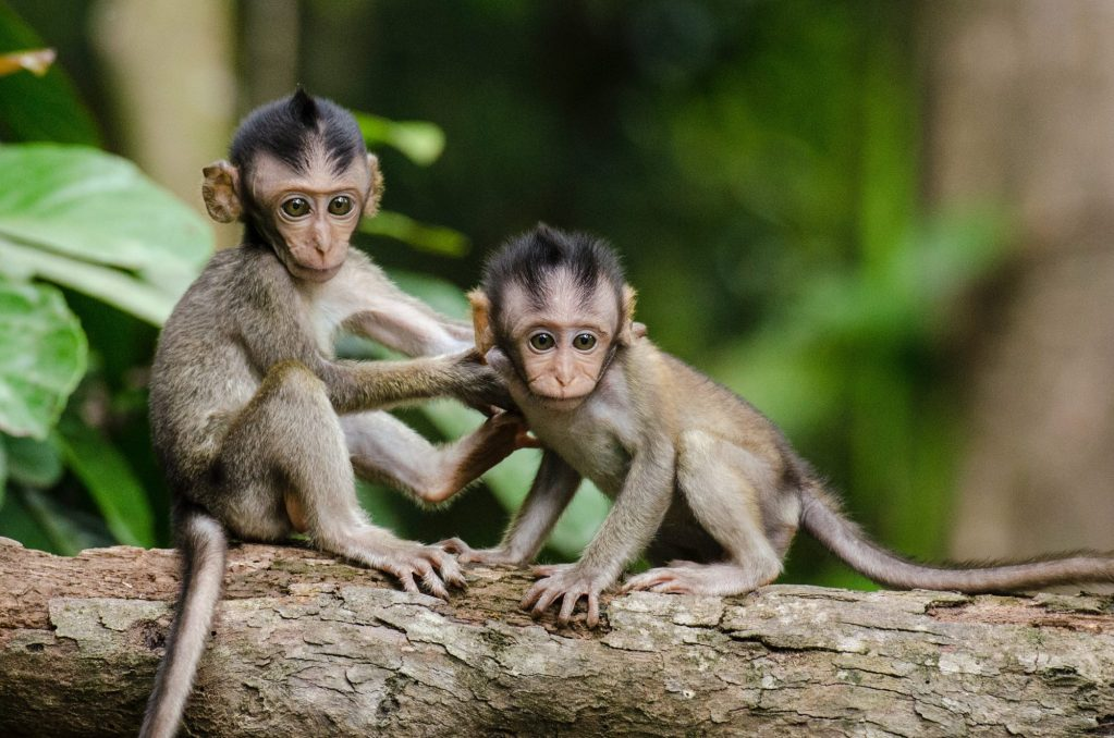 Were Your Coconuts Picked by Abused Monkeys?