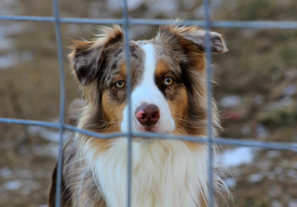 Can You Adopt A Dog That Lives In Another State?