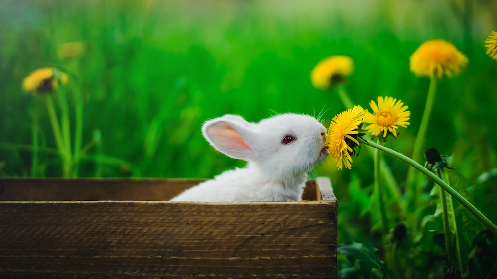 How to Have a Kind Easter Celebration