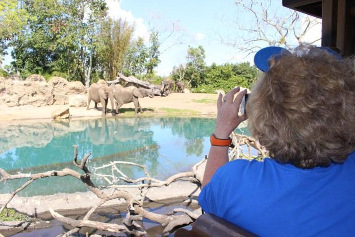 Lavonne takes in the wildlife on the Kilimanjaro Safari in Disney's Animal Kingdom.