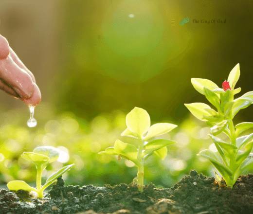 Watering small trees with drop under hands