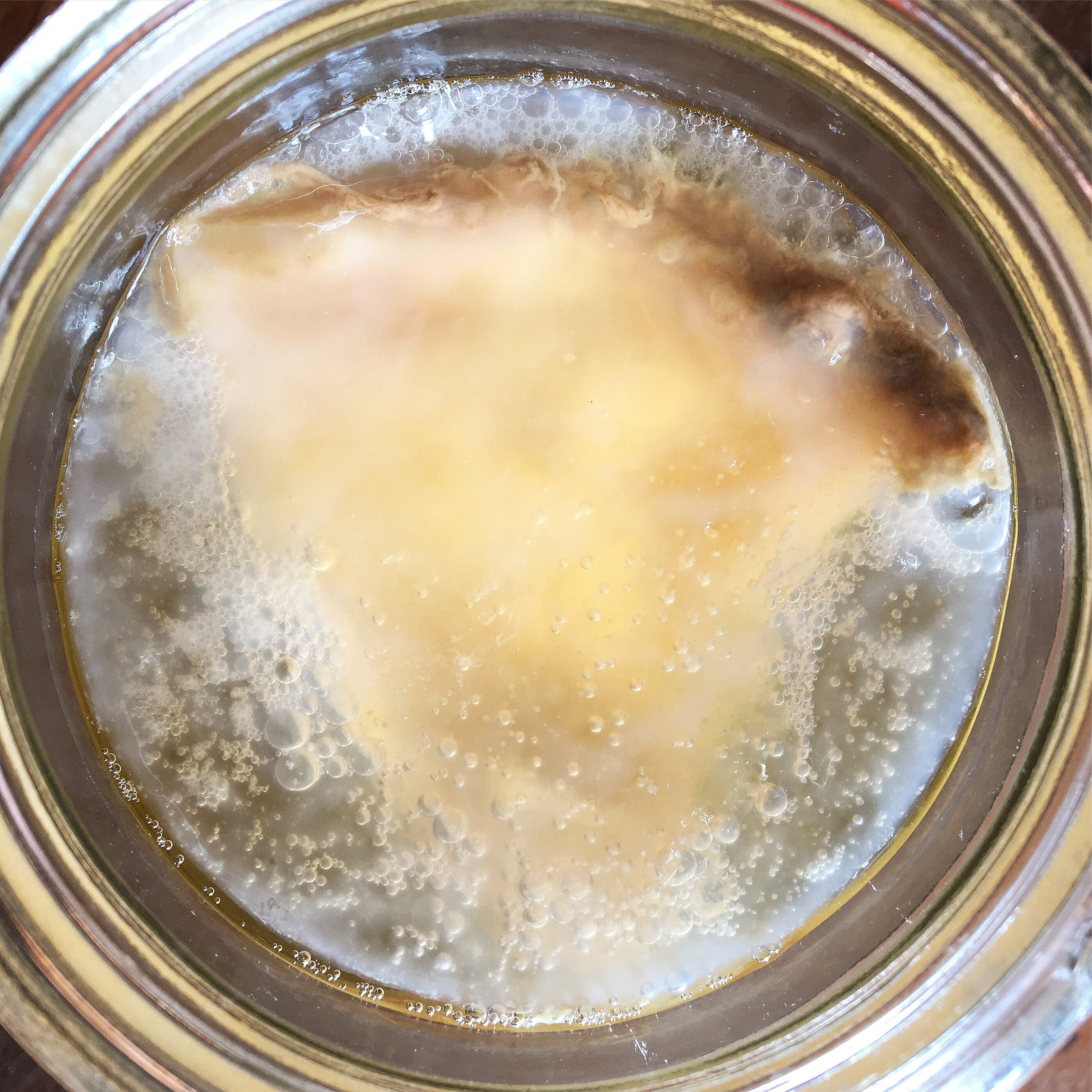 jun kombucha scoby fermented drink