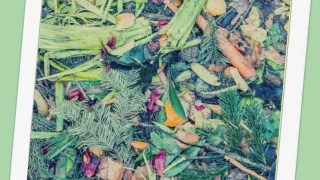 Confessions of a Composting Quitter