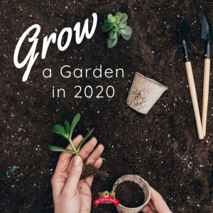 hands planting a garden in soil