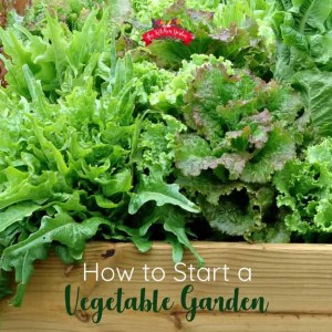 wooden garden bed overflowing with fresh salad greens