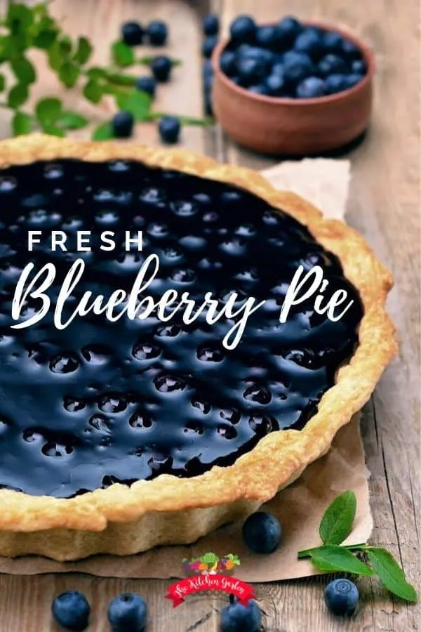 blueberry pie with fresh blueberries on the side