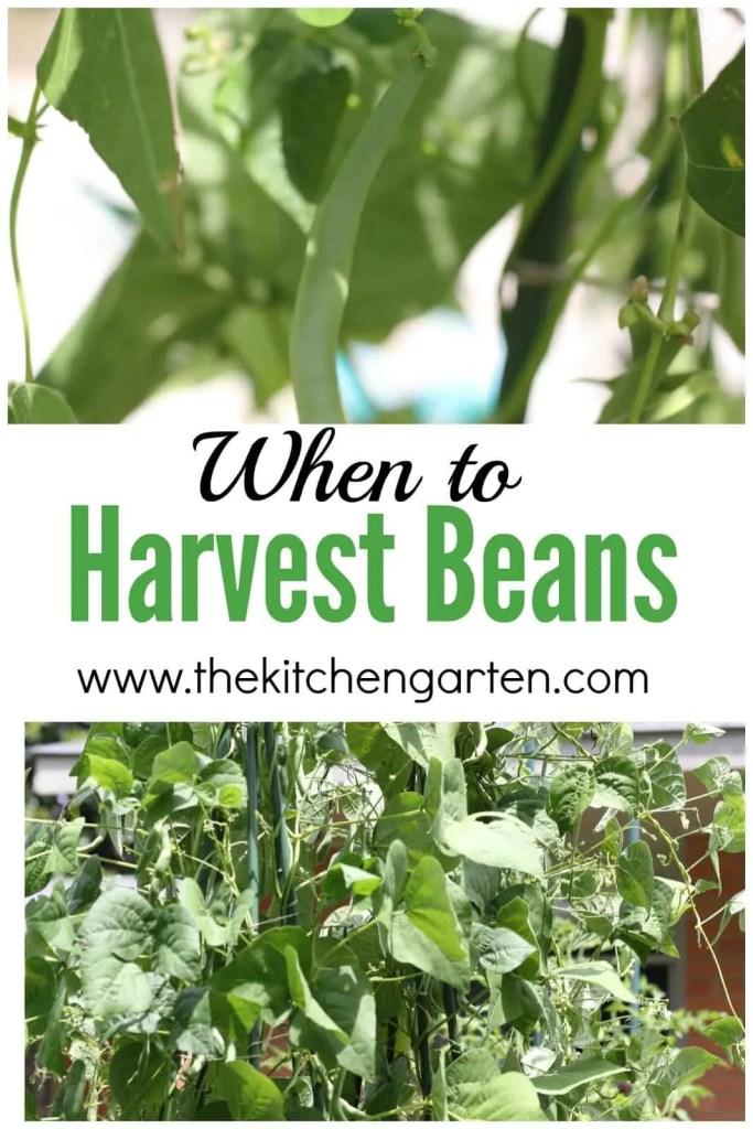 green beans pin