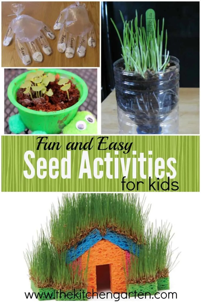 seed activities
