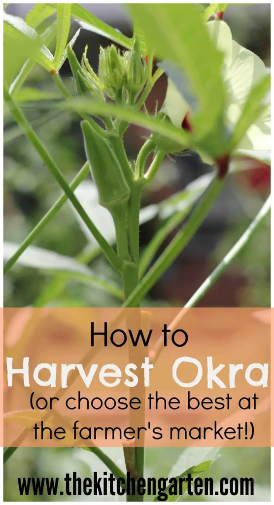harvest okra pin
