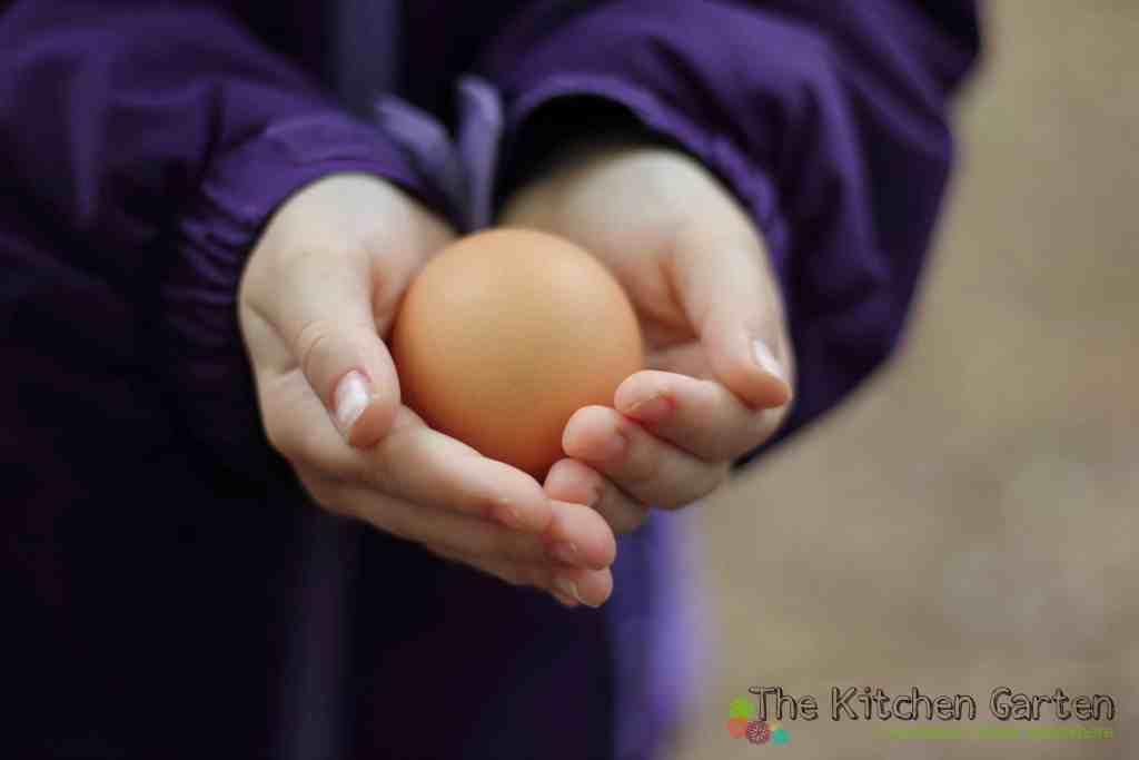 fresh egg in hand