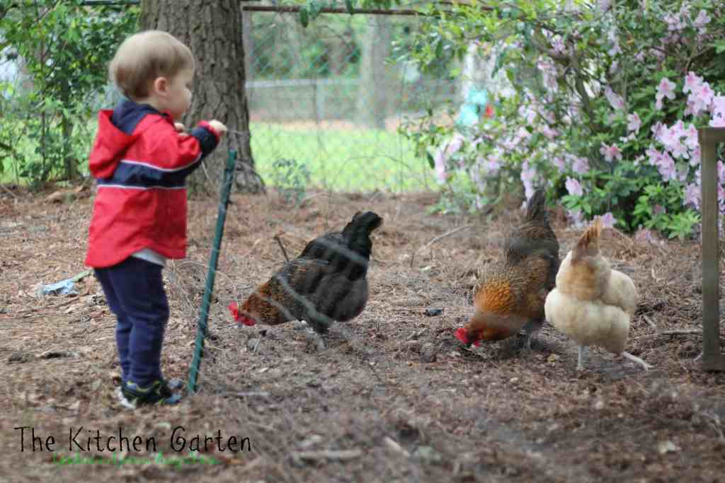 kid with chickens