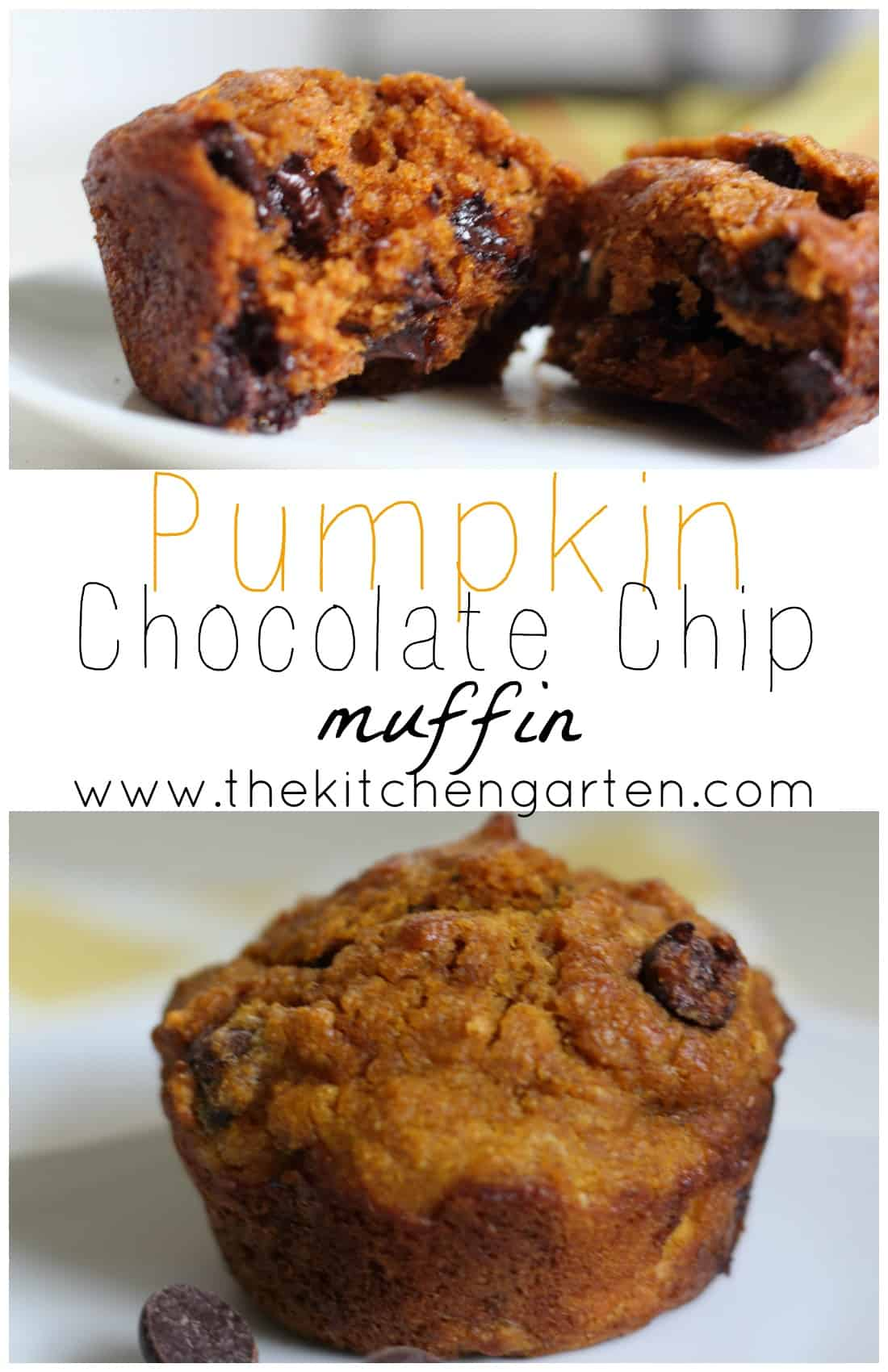 Pumpkin, chocolate, and whole grains! A perfect breakfast, snack, or anytime treat, these muffins are a family favorite and easy to make!