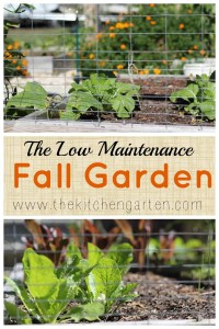 fall vegetable garden