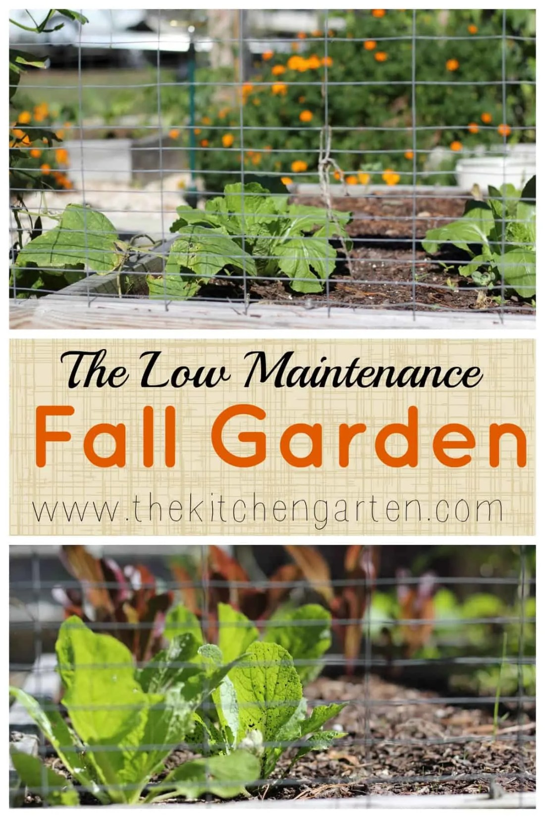 Fall is the perfect time to garden... less water and less work for the gardener! What can you plant in the fall garden and is it too late to start?