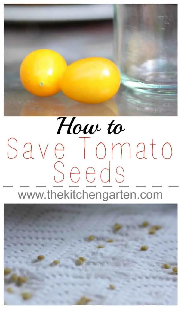 tomato seeds pin