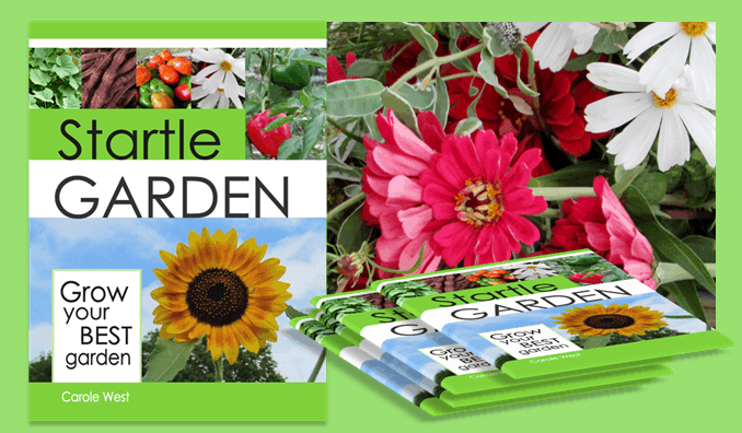 Creating a Startle Garden Giveaway